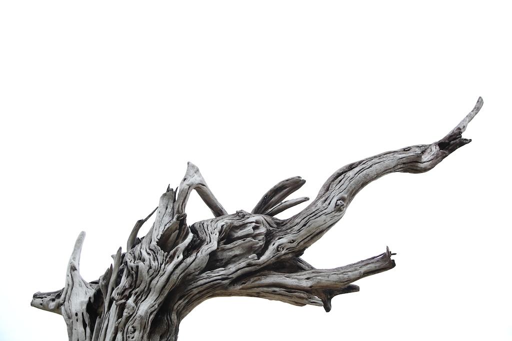 Nikoi driftwood by Tanya Moss